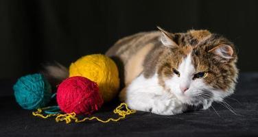 missnöjd katt med garn foto