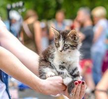 kvinna som håller ut en kattunge foto