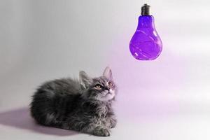 kattunge tittar på lila glödlampa foto
