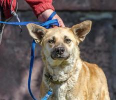 brun hund med ägaren