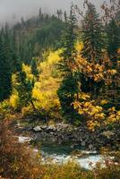 flod i höstskogen foto