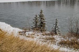 träd nära vatten foto