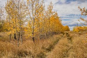 höstfärger visas i fälten runt Calgary foto