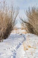 fotavtryck i snön foto