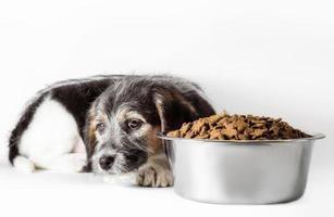 ledsen hund med skål med mat
