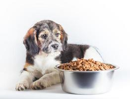 hund sitter bredvid mat skål foto