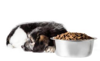 hund som ligger bredvid mat foto