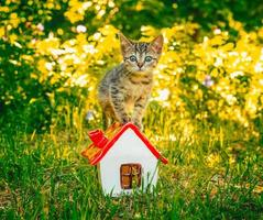 kattunge på ett hus foto