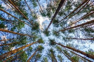 höga träd på himlen foto