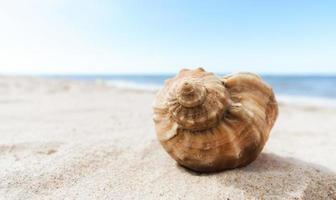 snäckskal på stranden foto