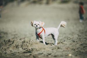 vit hund i sand foto