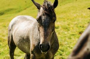 närbild av en brun häst foto