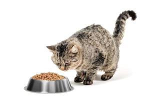 katt med matskål foto