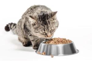 katt som äter torrfoder foto