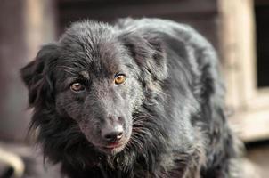 svart hund utanför foto