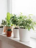 krukväxter på fönsterbrädan foto