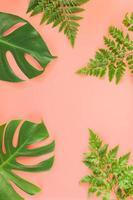 monstera och ormbunkeblad låg på rosa bakgrund foto