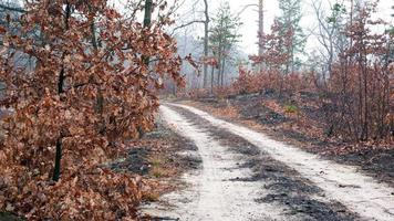 väg i en dimmig morgonskog foto