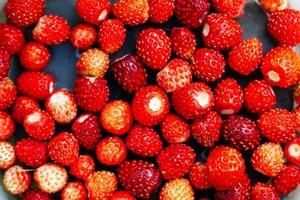 skog säsongsbär, röda mogna saftiga vilda jordgubbar närbild foto
