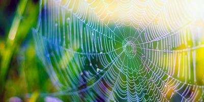 vacker vit spindelnät på grönt gräs bakgrund foto