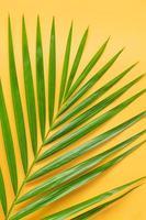 palmblad isolerad på orange bakgrund. sommar bakgrund koncept. foto
