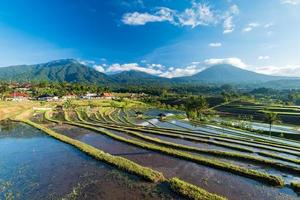risfält i jatiluwih i sydöstra Bali foto