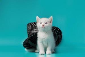 katt med randig hatt foto