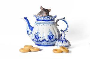 mus i en tekanna med snacks foto