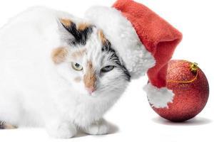 katt som bär en santa hatt foto