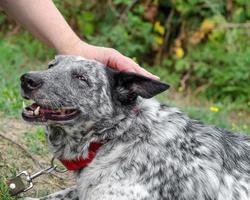 prickig hund är husdjur foto