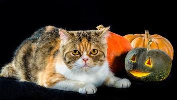katt med halloween inredning foto