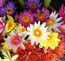 färgglada lotusblommor bakgrund foto