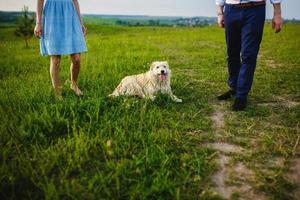 glad hund vilar med ägarna i naturen. ha kul med sin hund i parken foto
