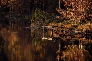 träbro på sjön. löv som flyter i vattnet, höst, timmerbro, plattform för fiskare foto