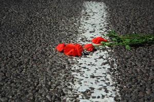 röd vallmo som ligger på vägen. blomman av röd vallmo som ligger på asfaltvägen på nära håll. selektivt fokus