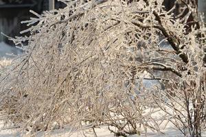 trädben och grenar täckta av istappar foto