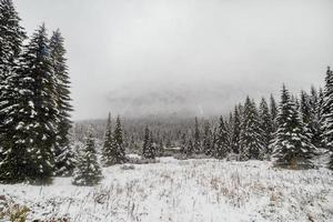 landskap snö träd och avverkade träd skog på vintern. berg i bakgrunden. morske oko foto