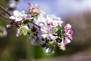 vackra blommor på våren foto
