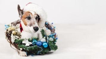 hund bär hatt med juldekorationer. upplösning och vackert foto av hög kvalitet