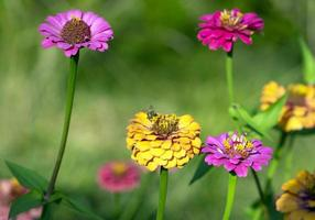 bi bland färgglada blommor med suddig trädgård bakgrund foto