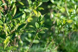 gröna växter med suddig bakgrund i dagsljus foto