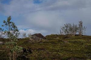 landskap med träd, vegetation och en molnig blå himmel foto