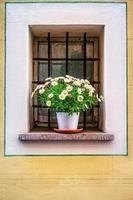 kruka med blommorna i fönstret foto