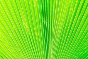 vackra gröna bananbladstrukturer för bakgrund foto