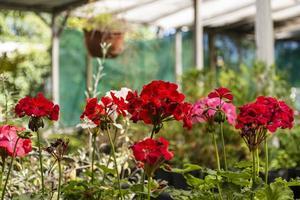 närbild av blommor i trädgården foto