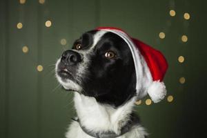 söt hund som bär santas röda hatt foto