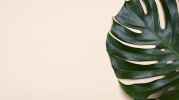 platt låg monstera blad med kopia utrymme på persikafärgad bakgrund foto