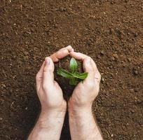 trädgårdsmästare som planterar i marken foto
