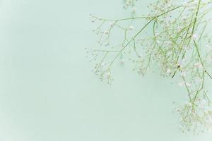 gröna blommiga grenar på mintbakgrund foto