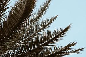 palmblad och blå himmel under vårsäsongen foto